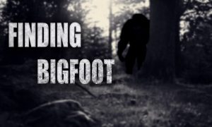 Finding Bigfoot iOS/APK Full Version Free Download